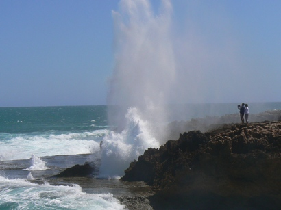 Blowholes in full flight